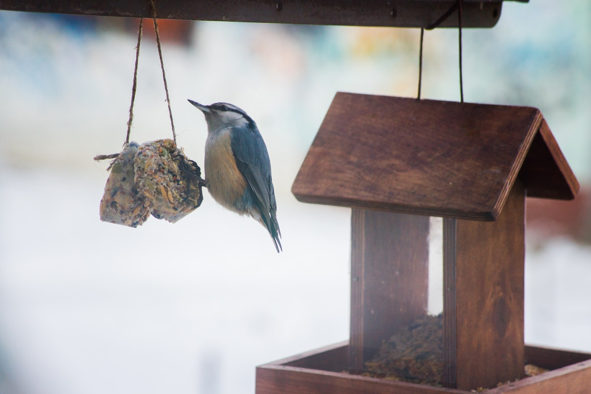 A bird sits on a birdseed ornament from earth day activities for kids.